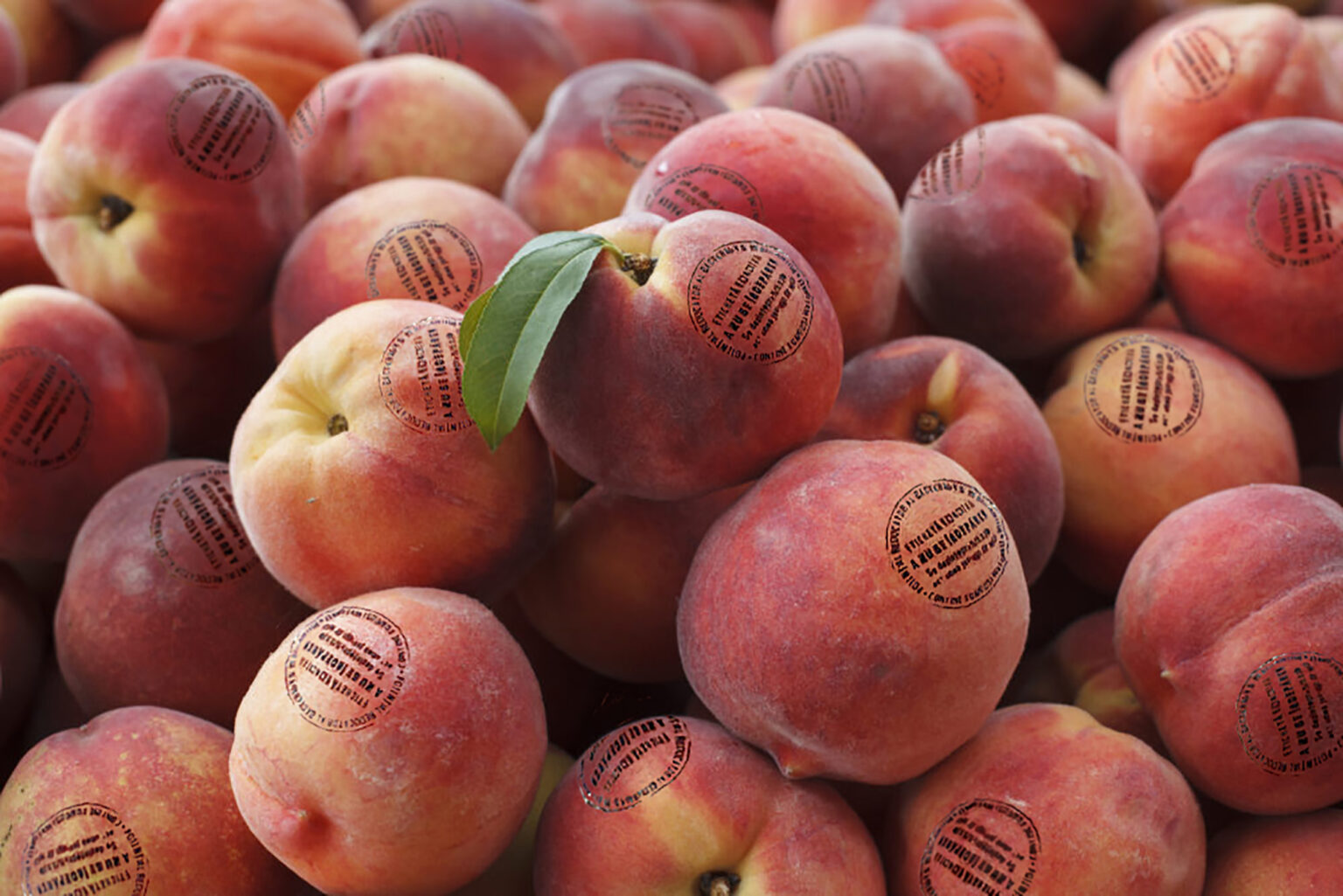 Startup-ul Peelhy vrea să revoluționeze piața igienizării fructelor și legumelor cu o bio-etichetă antimicrobiană dezvoltată în România
