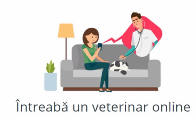A fost lansată prima platformă de telemedicină veterinară din România